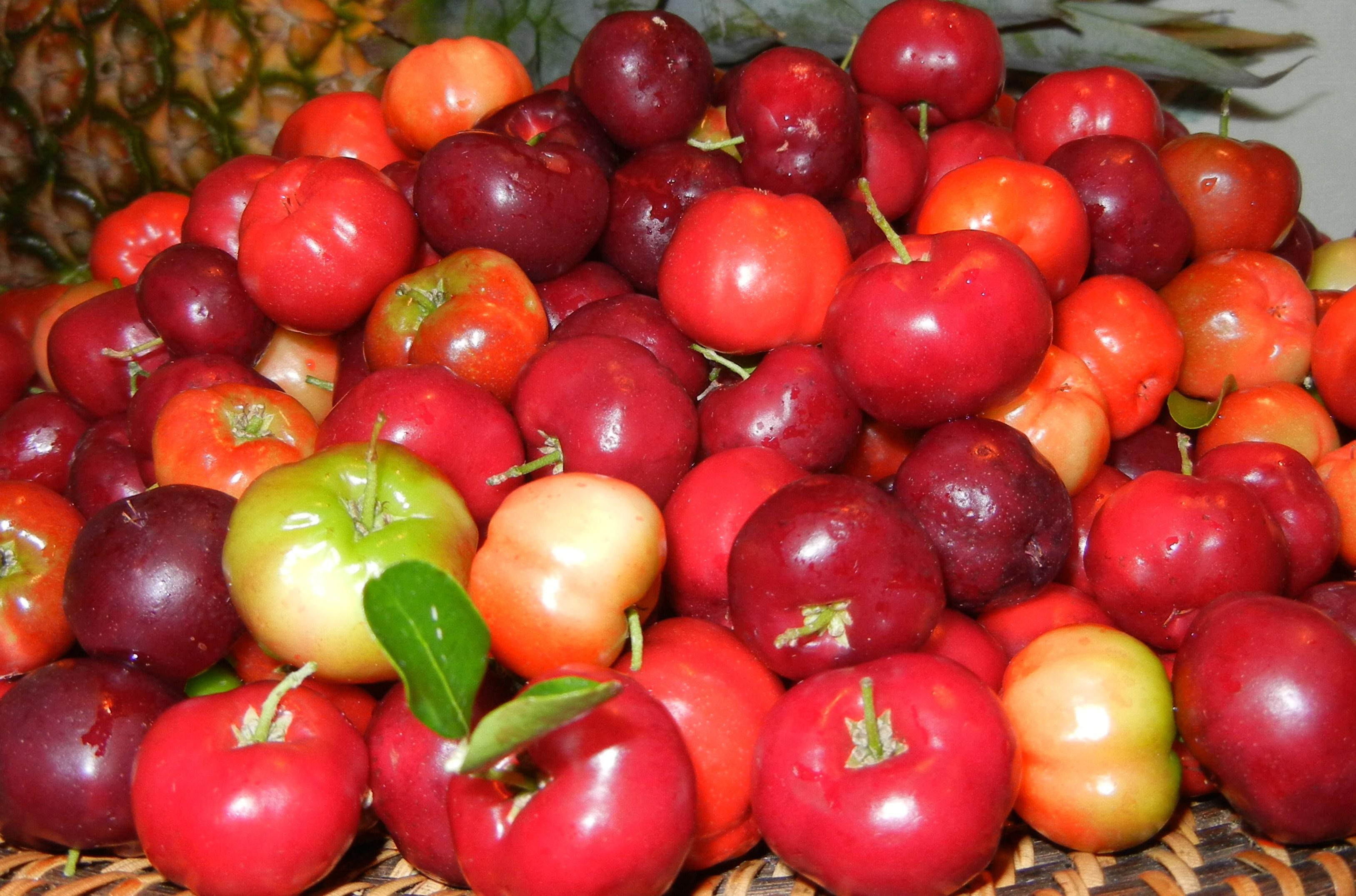 Strawberry Tree, Jamaica Cherry - Muntingia calabura