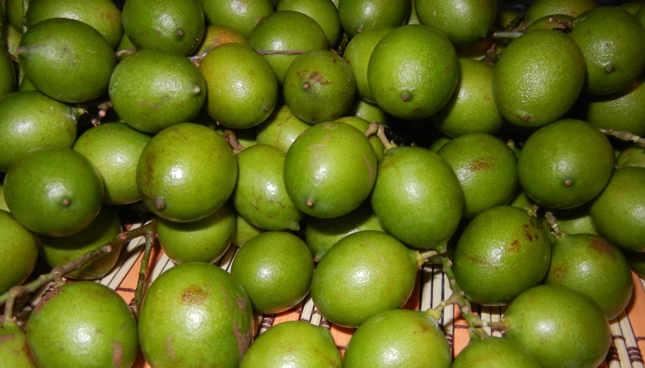 Jamaican Guinep